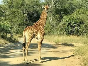 Sabie Park Private Wildlife Nature Reserve