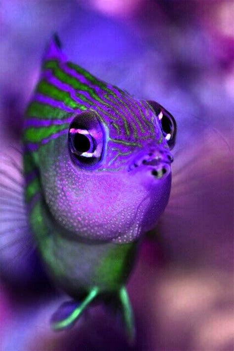 refreshing fascinating  pretty fish photography