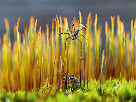 spider image minnesota national geographic photo   day