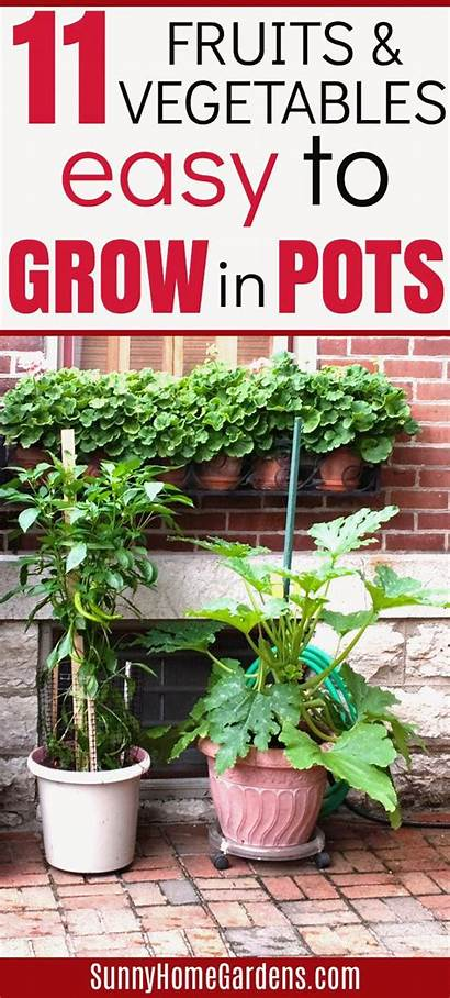 Vegetables Grow Pots Container Fruits Easy Gardening