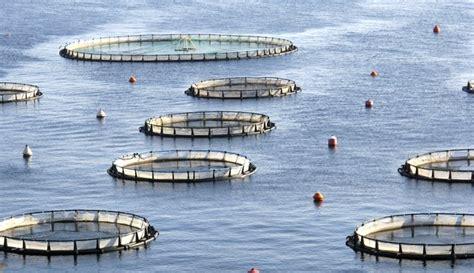 fish farming tools equipment livestrongcom