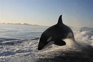 Personal Journal Video Jet Ski Fishing Show Followed By Killer Whales