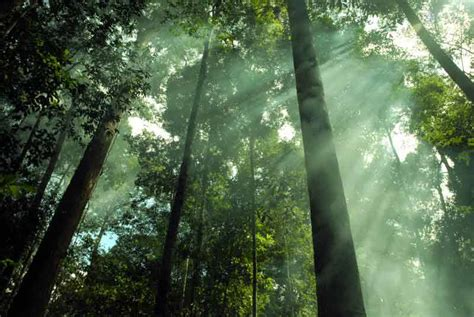 hutan hujan tropis alamendahs blog