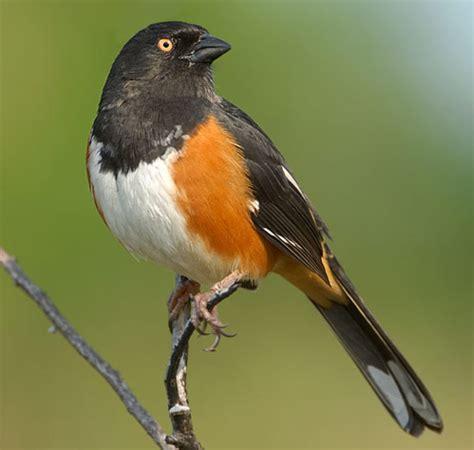 best 28 northeastern birds identification best 28