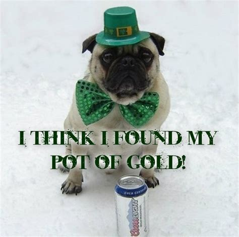 St Patricks Day Funny Memes - memes images funny pug dog st patrick day wallpaper and background photos 33928901
