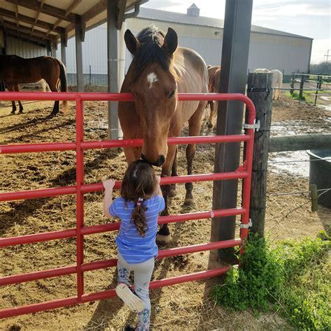 than why horses better horse boyfriends girlfriends tbt