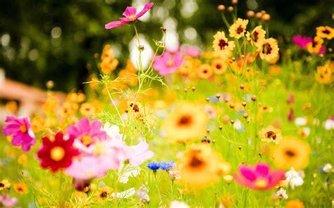 Fondos De Flores 1920X1080 Hd Para Fondo En Hd Gratis 17