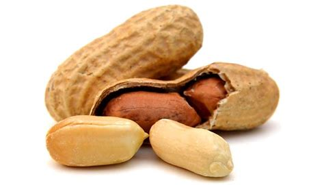 can dogs eat peanuts or are peanuts bad for dogs