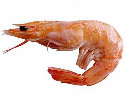 Shrimp Pc Wallpapers
