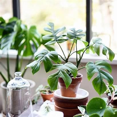 Plants Pot Indoor Tropical Them Botany Already