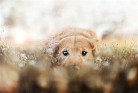 photographer captures beautiful portraits   pet dogs