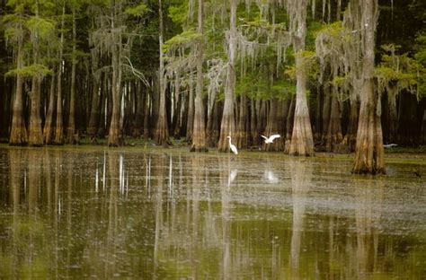 Boat Rental Atchafalaya Basin by Best Cgrounds In Louisiana Total Survival