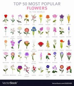 Your Garden Guide Top 50 Most Popular Flowers Vector Image