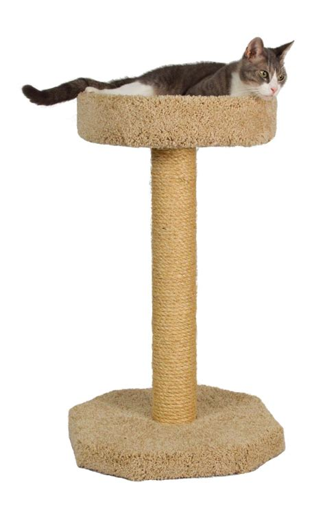 cat scratching post sisal molly and bed and sisal scratching post
