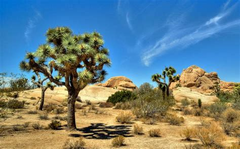 joshua tree national park day trip    attractions