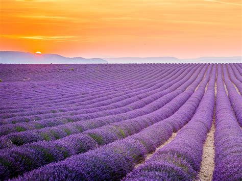 lavender field provence france hd wallpaper background