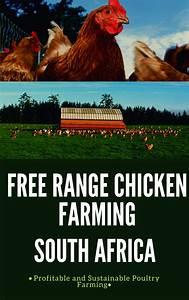 Free Range Chicken Farming Manual In 2020