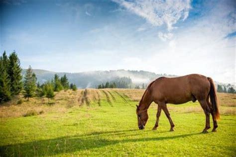 faule pferde richtig fuettern masterhorse infowissen