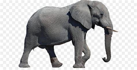 elephant clipart transparent background