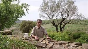 Se Débarrasser Des Mouches Naturellement : comment lutter naturellement contre la mouche des oliviers ~ Melissatoandfro.com Idées de Décoration