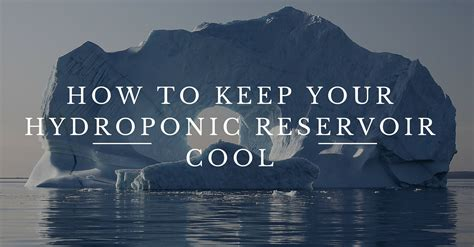 how to your how to keep your hydroponic reservoir cool