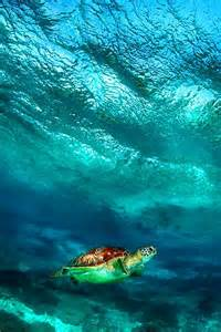Sea Turtle Under a Wave