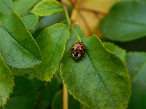red insects  green leaves  stock photo