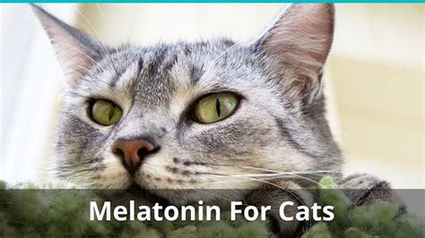 best melatonin for cats