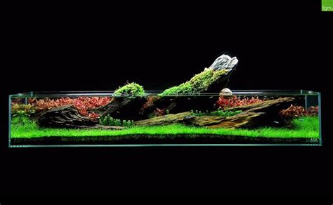 The Green Machine Aquascape by The Green Machine Is A Uk Aquarium Shop Specializing In