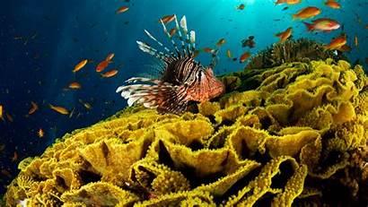 Underwater Wallpapers Fish Seaweed Corals