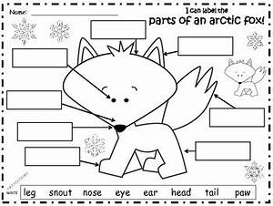 a arctic fox label the parts of the arctic fox by regina With arctic fox diagram