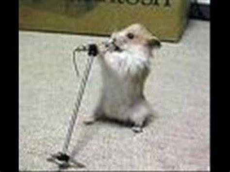 singing hamster 2 youtube