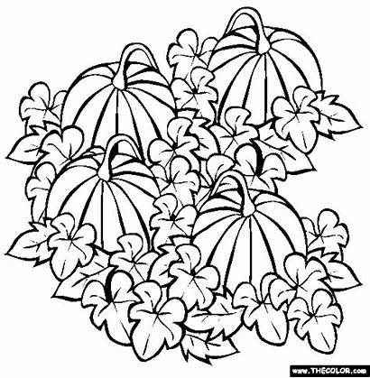 Pumpkin Coloring Patch Pages Drawing Vine Halloween