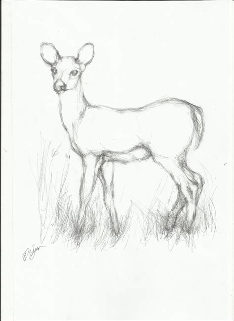 animal sketches  pencil animals zimejumi