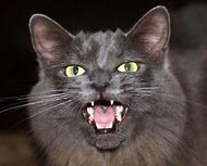Creepy Scary Halloween Cat