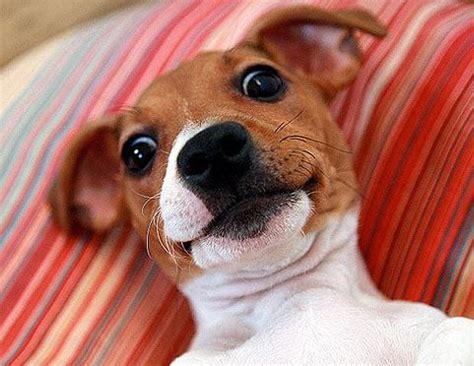 dog selfies  pics pleated jeans