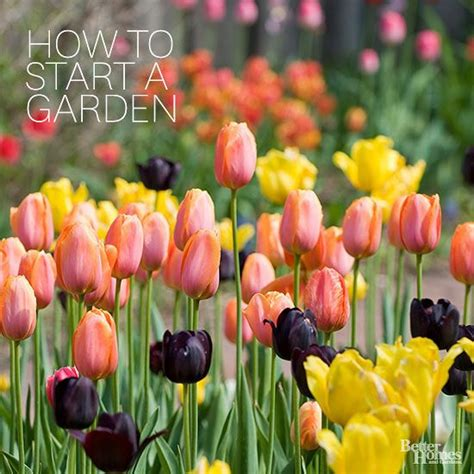 25 best ideas about gardening for dummies on