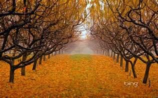 Bing Official Autumn Wallpaper