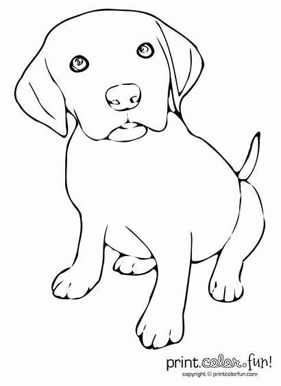 Puppy Coloring Pages Dog Lab Labrador Stencils