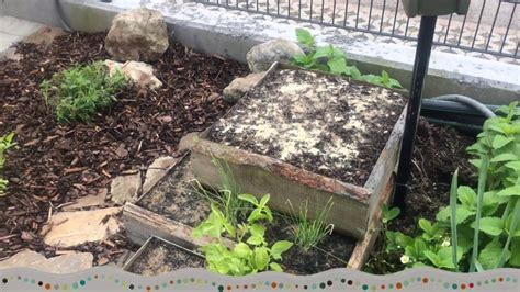 Kräuterbeet Anlegen Fotos by Kr 228 Utergarten Neu Anlegen