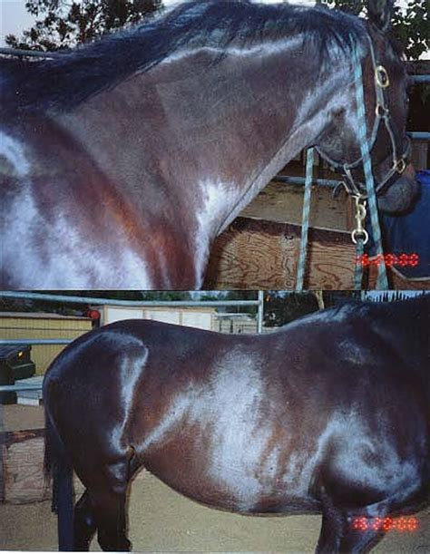 hives horse equine clinical eleventh trials histories case
