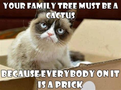 Grumpy Cat Meme, Grumpy Cat Pictures