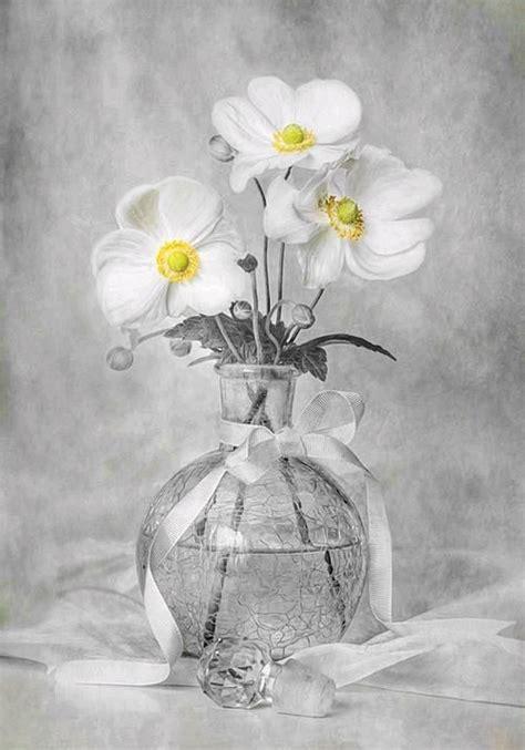 life photography amazing white flowers fav