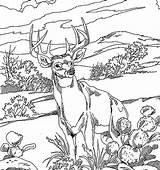 Coloring Deer Hunting Adults Popular sketch template