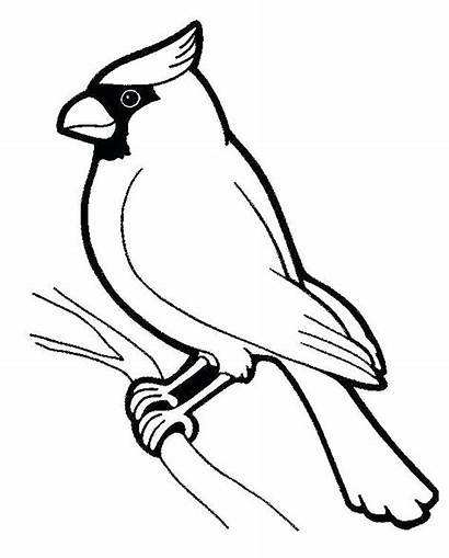 Birds Coloring Printable Pages Children Animals