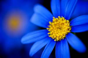 Blue Flower | WeNeedFun