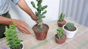 5 suculentas raras cactus y crasas YouTube