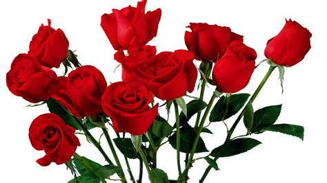 flowers flower red roses wallpaper image wallwuzz hd