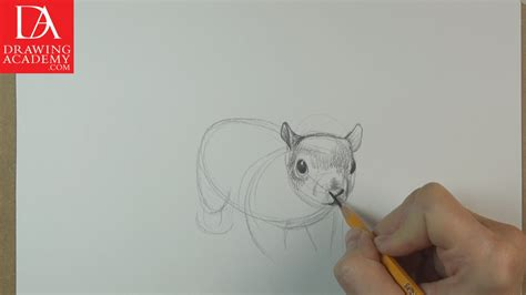 draw animals video lesson  drawing academy