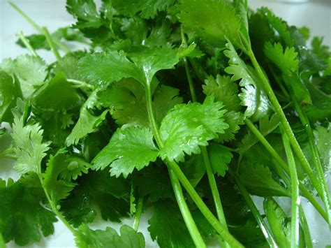 cilantro soap science explains why cilantro tastes like soap for certain people huffpost